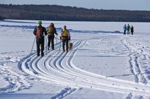 ski-vinter